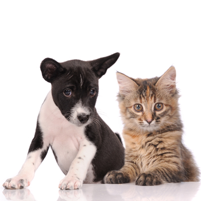 cincoanimalhospital in Katy, TX - Welcome to our site!